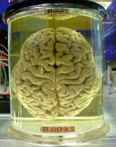 Human_brain_in_a_vat